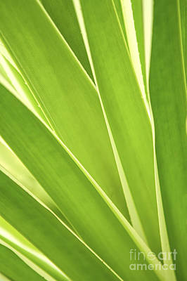 Tropical Leaves Print by Elena Elisseeva