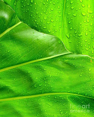 Photograph - Tropical Leaves by Ranjini Kandasamy