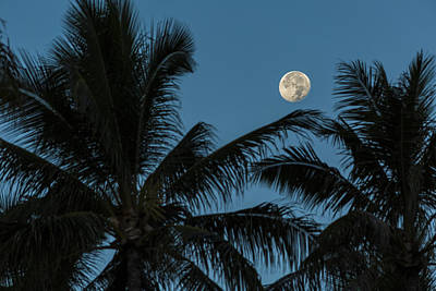 Photograph - Tropical Moon 1 by Leigh Anne Meeks