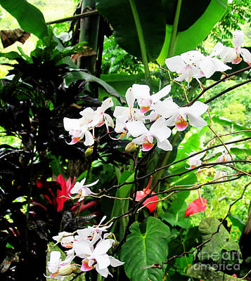 Tropical Orchids Art Print by Tina M Wenger