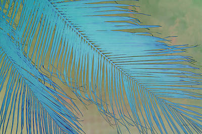 Photograph - Tropical Palm In Blue by Ann Powell