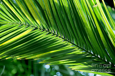 Closed Photograph - Tropical Palm Leaf by Michal Bednarek