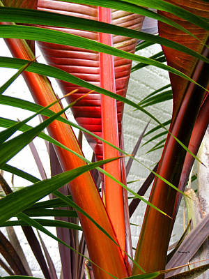 Photograph - Tropical Palm Leaves by Duane McCullough