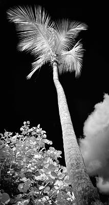 Ir Photograph - Tropical Palm St. John by Luke Moore