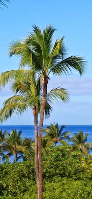 Photograph - Tropical Palm Tree In Maui by Athena Mckinzie