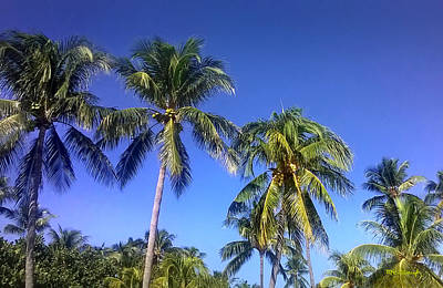 Photograph - Tropical Palm Trees 3 by Duane McCullough