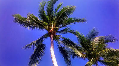 Photograph - Tropical Palm Trees 4 by Duane McCullough