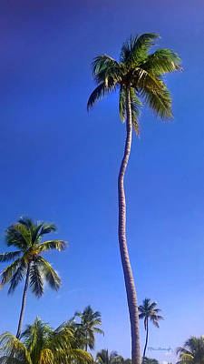 Photograph - Tropical Palm Trees 6 by Duane McCullough