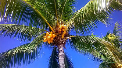 Photograph - Tropical Palm Trees 7 by Duane McCullough