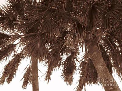 Seascape Wall Art - Photograph - Tropical Palms by Megan Cohen