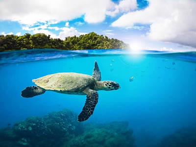 Turtle Wall Art - Photograph - Tropical Paradise by Nicklas Gustafsson