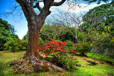 Photograph - Tropical Park. Mauritius by Jenny Rainbow