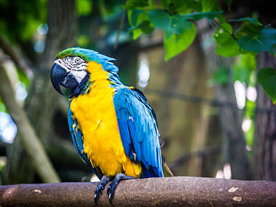 Photograph - Tropical Parrot by Sara Frank
