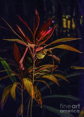 Photograph - Tropical Plant Abstract by Richard Mason