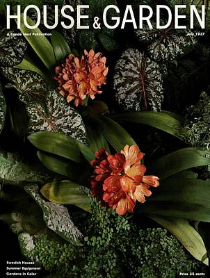 Clivia Flowers Photograph - Tropical Plants by Anton Bruehl
