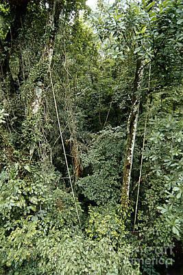 Tropical Rainforest, Panama Art Print