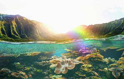 Photograph - Tropical Reef Under Rural Cliffs by Colin Anderson Productions Pty Ltd