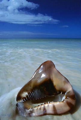 Photograph - Tropical Shell by George Tuffy