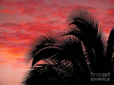 Photograph - Tropical Silhouette by Ellen Cotton