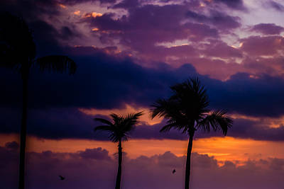 Photograph - Tropical Sunrise by Sara Frank