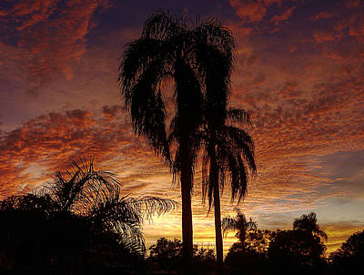 Photograph - Tropical Sunset by Kandy Hurley