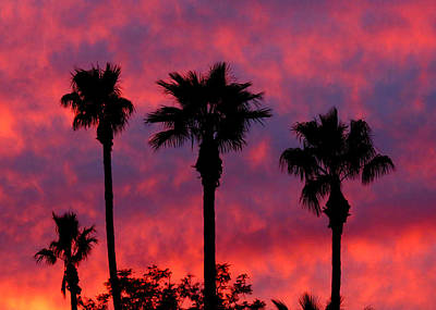 Photograph - Tropical Sunset by Laurel Powell