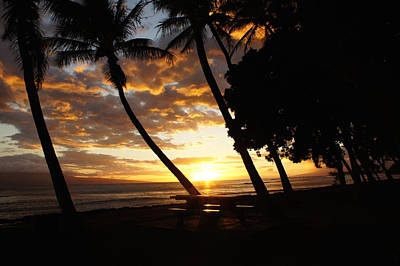 Coconut Photograph - Tropical Sunset by Art Spectrum