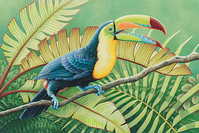 Tropical Toucan Art Print