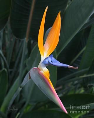 Photograph - Tropical Touch by Geri Glavis