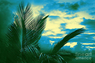 Photograph - Tropical Tri Tone by Ellen Cotton