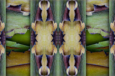 Montage Photograph - Tropical Two by Carol Leigh