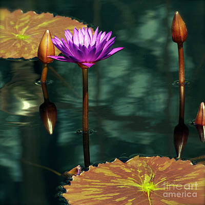 Photograph - Tropical Waterlily Elegance by Byron Varvarigos