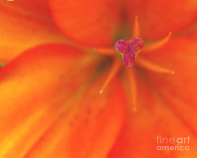 Photograph - Tropicalesque Bouquet7 by Janet Otto
