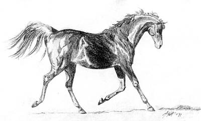 Drawing - Trotter by Audrey Van Tassell