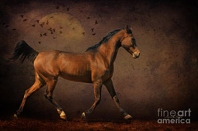 Crazy Horse Photograph - Trotting Into The Night by Karen Slagle