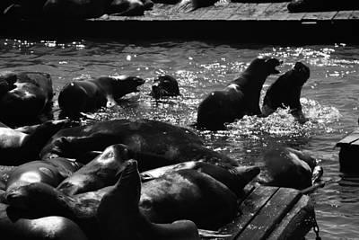 Photograph - Trouble At Pier 39 by Aidan Moran