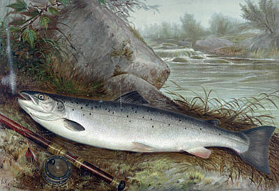 Trout Fishing Drawing - Trout, 1878 by Granger
