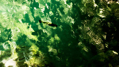 Photograph - Trout In Emerald by Weston Westmoreland