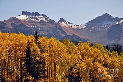 Photograph - Trout Lake Aspens by Randy Rogers