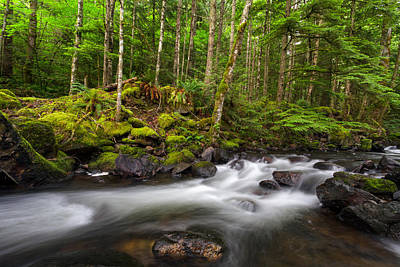 Harrison Hot Springs Wall Art - Photograph - Trout Lake Creek In The Rainforest by Michael Russell