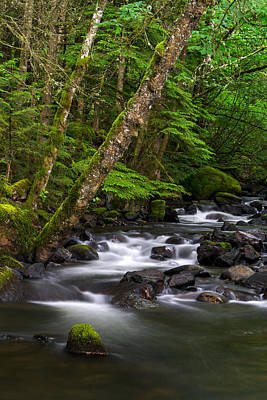 Harrison Hot Springs Wall Art - Photograph - Trout Lake Creek Rainforest by Michael Russell