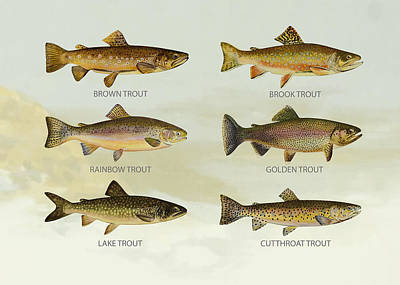 Salmon Digital Art - Trout Species by Aged Pixel