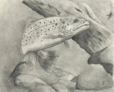 Trout Drawing - Trout#1 by Christopher Hughes