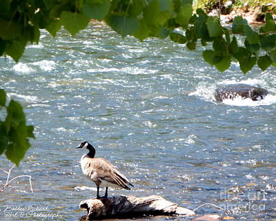Photograph - Truckee River Visitor by Bobbee Rickard