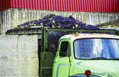 Truckload Of Grapes Print by Timothy Hacker