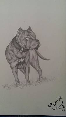 Pitbull Drawing - True Blue  by Connie Blevins