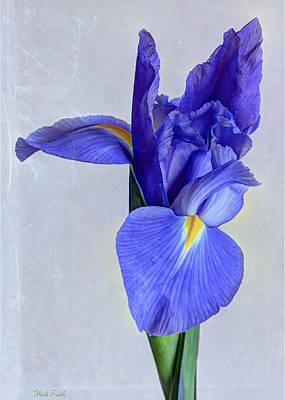 Photograph - True Blue by Heidi Smith