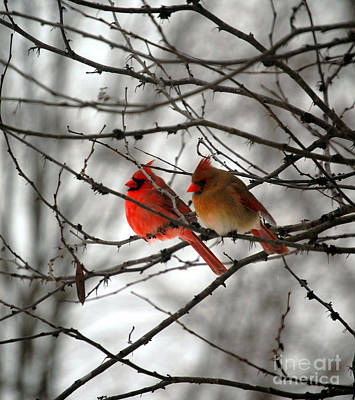Animals Royalty-Free and Rights-Managed Images - True Love Cardinal by Peggy Franz
