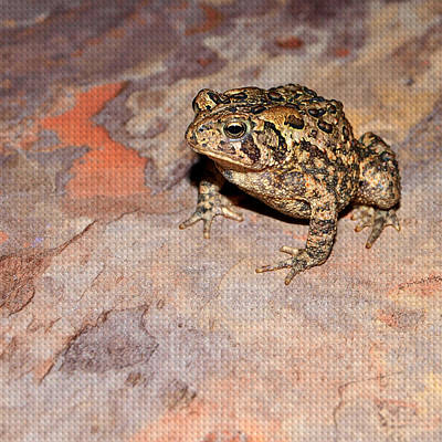 True Toad Print by Tom Druin
