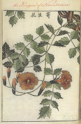Trumpet Flower Art Print